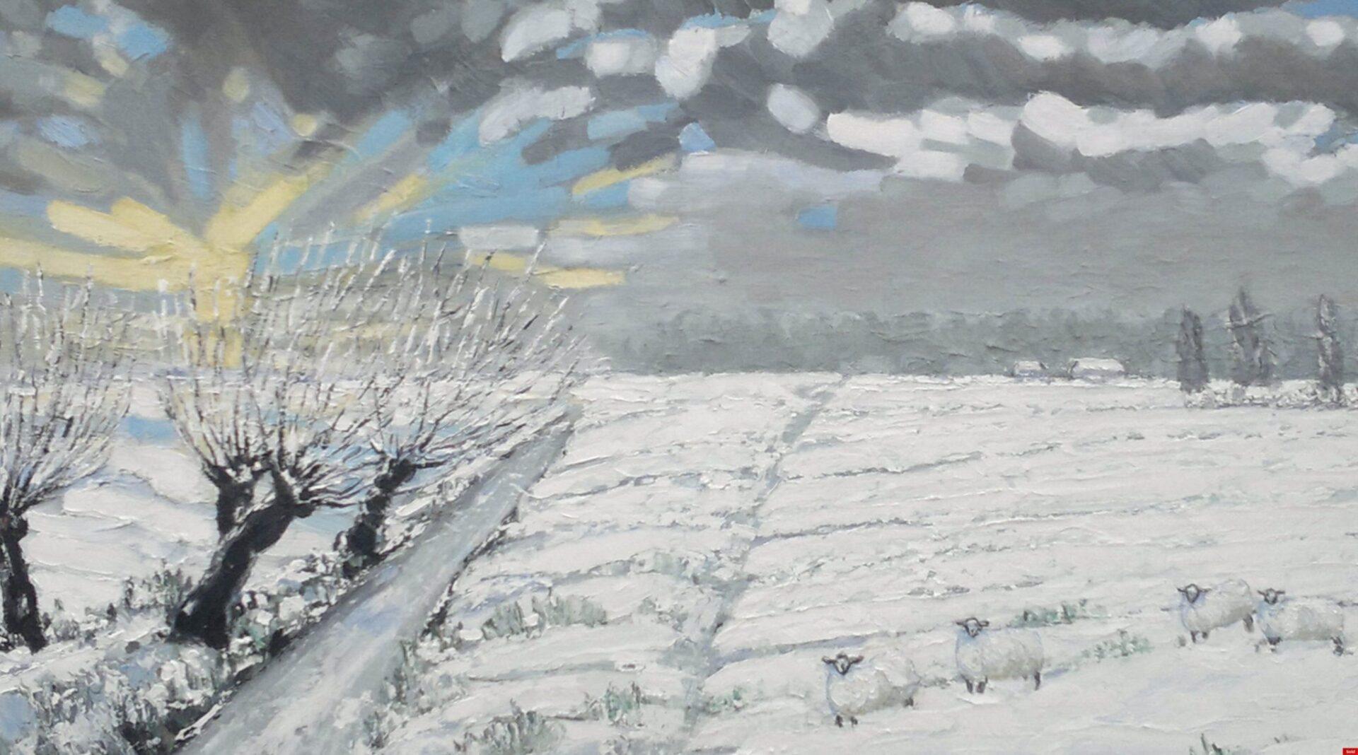 Schapen in de sneeuw in Zeeuws-Vlaanderen