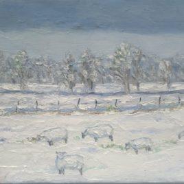 Vijf schapen in de sneeuw op Walcheren
