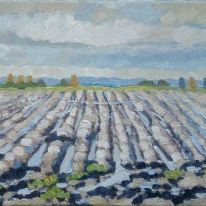 Geploegd land Walcheren Olieverf op linnen - 24 x 30 cm